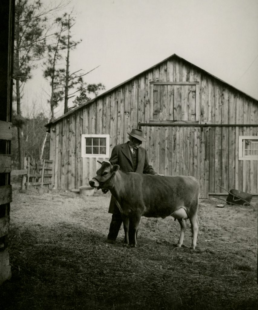 Howard W. Odum with one of his cows